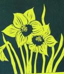 Yellow Daffs